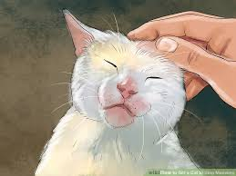 cat stop 4 ways to get a cat to stop meowing wikihow