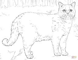 Cats Coloring Pages Throughout Printable Cat