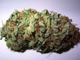 Nothing but the Hits 5 Cannabis Strains