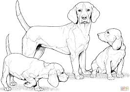 Beagle With Puppies Coloring Page Free Printable Pages