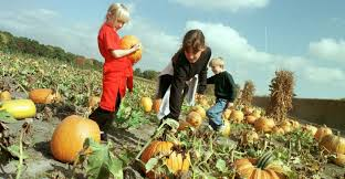 Local Pumpkin Farms In Nj by Usa Holidays Halloween 3 Halloween Pictures History Of
