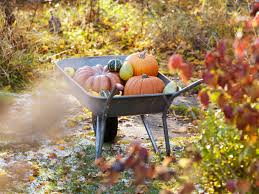 Fall Ve able Gardening Tips