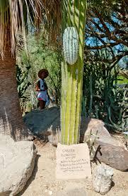 Entering Cactus Heaven Inside the Moorten Botanical Garden of