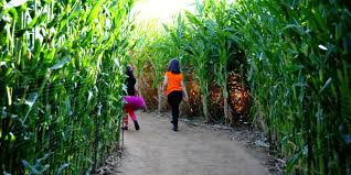 Pumpkin Patch Near Killeen Tx by Find Corn Mazes In Texas Longest U0026 Best Corn Mazes And Halloween