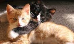 How To Keep Cats Away From Furniture Cat Health And Care