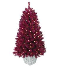 Plantable Christmas Trees For Sale by Cranberry Crush Potted Christmas Tree Treetopia