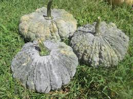 Stages Of Pumpkin Plants by Kentucky Fried Garden