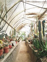 Plam Springs CA Moorten Botanical Garden
