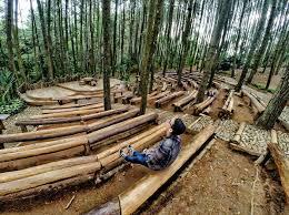 Mendunia Ini Panggung Hutan Pinus Mangunan Dlingo Bantul Jogjakarta