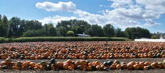 Pumpkin Patch Utah by Pumpkin Point Farms Home