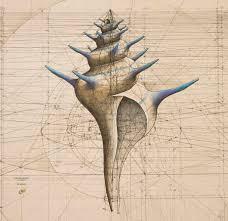 Fibonacci Sequence Shell By Rafael Araujo Golden Ratio Art The Divine Proportion