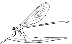 Dragonfly Coloring Pages Sheets Lovely Free Printable Luxury Page 2 Of Print