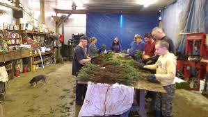 Christmas Tree Seedlings Wholesale by Wholesale Christmas Trees U2013 Schmuckal Transplanting Service