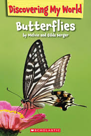 Answers to Kids Questions About Butterflies