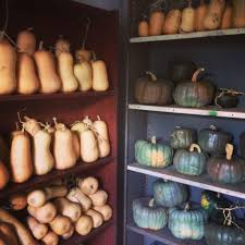 Organic Pumpkin Seeds Australia by How To Make Pumpkin Leather Fair Harvest Permaculture Margaret