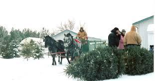 Types Of Christmas Trees Canada by Cd Trees Christmas Tree Farm