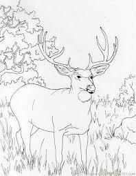 Coloring Pages Muledeer Mammals Deer