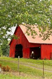 2610 Best BARNS Images On Pinterest   Country Barns, Country Charm ... Southern Crossing Antique Mall Jacksonville Florida Consignment Barn Antique Mall Primitive Longleaf Lumber Reclaimed Red White Oak Wood Best 25 Antiques Road Trip Ideas On Pinterest New Mexico The Old Home Facebook Washington Wedding Venues Reviews For 454 2271 Best Barns Renovated Images Country 15 Flea Markets In Crazy Tourist Uptown Vintage Market Uptown Stable Decor Shipping Your Company 1 Site Sale