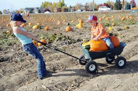 Denver Downs Pumpkin Patch Hours by Punkin Chunkin Bargain Halloween Costumes And More Free And Cheap