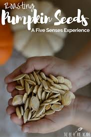 Books About Pumpkins For Toddlers by Roasting Pumpkin Seeds With Kids A Five Senses Experience To Be