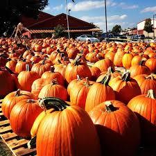Pumpkin Patch Near Dixon Ca by 19 Best Best Austin Pumpkin Patches Images On Pinterest Pumpkin