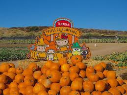 Pumpkin Patch Cal Poly Pomona by We Head To Tanaka Farms For A Sanrio Themed Pumpkin Patch Oc Weekly