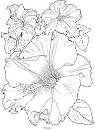 Petunia B Coloring Book Page From In Full Bloom A Dover
