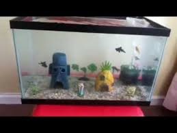 Spongebob Fish Tank Accessories by 10 Gallon Goldfish Spongebob Aquarium Update 2 Youtube