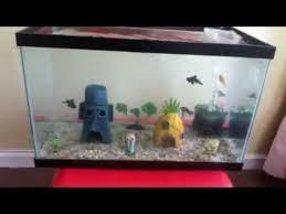 Spongebob Aquarium Decor Set by 10 Gallon Goldfish Spongebob Aquarium Update 2 Youtube