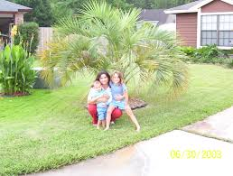 Pumpkin Patch Riverside Jacksonville Fl by Gardening In Northeast Florida Let U0027s Talk About Palm Trees Baby