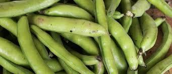 comment cuisiner les f es fraiches les fèves histoire qualités et cuisine des fèves fraîches ou sèches