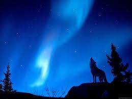 56 best Northern Lights images on Pinterest