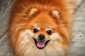 Too Much Pumpkin For Dogs Diarrhea by How Much Pumpkin To Give A Dog Daily What You Need To Know