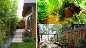 Bamboo Ideas For Backyard Backyards Gorgeous Bamboo In Backyard Outdoor Fence Roll Best 25 Garden Ideas On Pinterest Screening Diy Panels Best House Design Elegant Interior And Fniture Layouts Pictures Top How To Customize Your Areas With Privacy Screens Unique Ideas Peiranos Fences Durable Garden Design With Great Screen Of House Beautiful Download Large And Designs 2 Gurdjieffouspenskycom Tent Wedding Decoration Pictures They Say The Most Tasteful