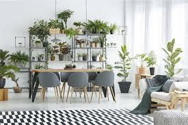 zimmerpflanzen wie grün ist ihr zuhause immo mitreden