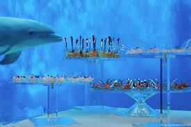 chambre dauphin les delphinariums en italie