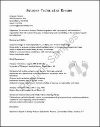 Resume Templates It Professional Template Ideas College