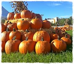 Pumpkin Patch Coconut Grove Groupon by Coconut Grove Grapevine Nothing Says Autumn Like A Pumpkin Patch