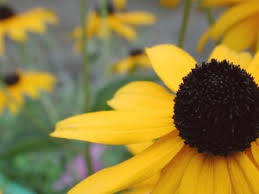 Attracting Insects To Your Garden by Great Tips For Attracting Beneficial Insects To Your Garden In