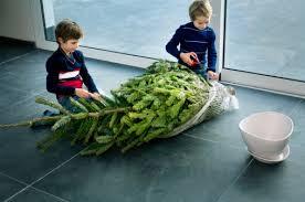 Aspirin Keep Christmas Trees Alive by How To Keep Your Christmas Tree Alive U0027til New Years Friedman U0027s