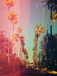 Pix For California Tumblr Photography Palm Trees