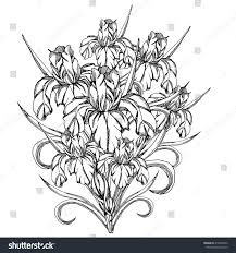 Sketch FlowerVector Decorative Trace Of Iris FlowersTemplate For Coloring Pages Adults