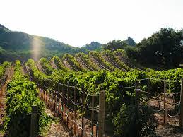 Rosenthal Wine Bar Patio Malibu by The West Coast Wine Road Trip Part I U2014 Malibu Wines