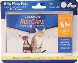 flea treatment for cats best flea treatment for cats fluffy kitty