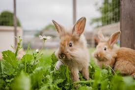 Can Rabbits Eat Pumpkin Seeds by What Do Rabbits Eat