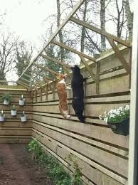 cats on deck 22 best cat enclosures images on cats cat stuff and