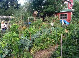 Permaculture 101 — PRI Cold Climate Thriving Backyard Food Forest 5th Year Suburban Permaculture Bill Mollison Father Of Gaenerd 101 Pri Cold Climate Archives Chickweed Patch Garden Design With Permaculture Kitchen Herb Spiral Backyard Orchard For The Yards Pinterest Orchards Australian House Garden January 2017 Archology Download Design And Ideas Gurdjieffouspenskycom Sustainable Farm Future Best 25 Ideas On Vegetable Youtube