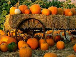 Pumpkin Patch In Fresno Ca by 5 Reasons Why Visiting A Pumpkin Patch Is Better Than Just Buying