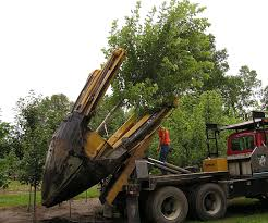 Trees - Knecht's Nurseries & Landscaping Dutchman Tree Spade For Sale Youtube Vmeer Tree Spade Mh50 Gmc C7d Truck Diesel Big John 65a Used Equipment New Page 10 Public Surplus Auction 444633 Dakota Peat Attachment Zone Ts40 1991 Gmc Sierra 3500 Pickup Truck With Item Dc0 1979 Chevrolet Bruin J1634 So Clyde Road Upgrade Relocation Archive Big John Spades