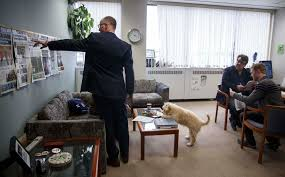 Shed Free Lap Dogs by Ruff Days At The Office Winnipeg Free Press